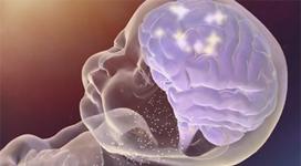 neurociencia bebe111