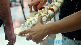 anatomia palpatoria pilar mansilla